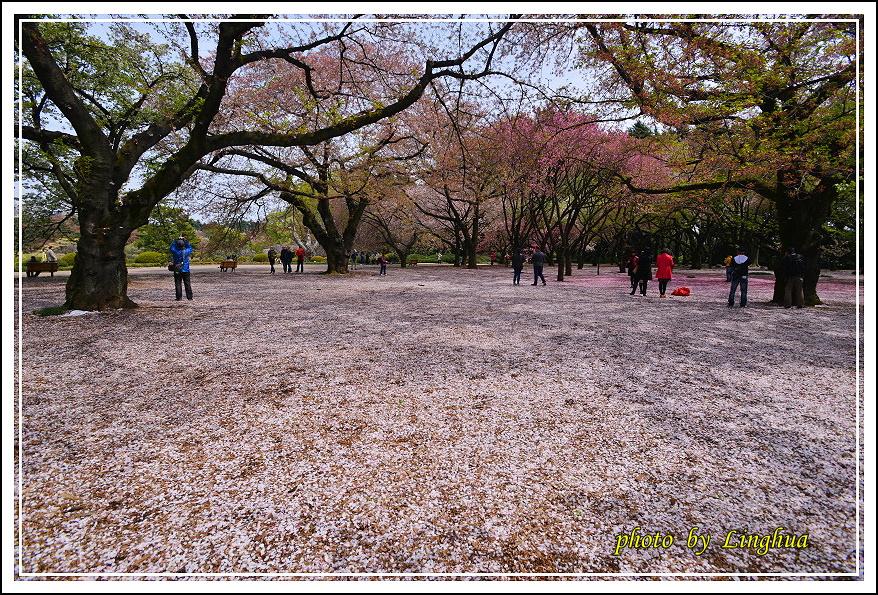 2015新宿御苑2(16).JPG