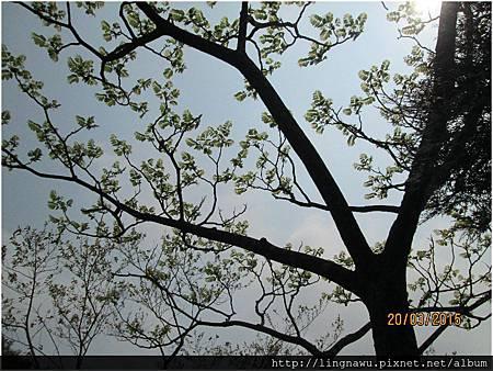 PhotoWindow_20150321133419
