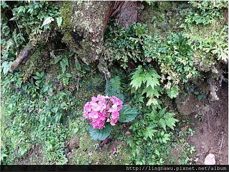 PhotoWindow_20160605163606.jpg