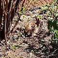 IMG_8355 兔子來到