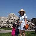 IMG_7832.JPG 紐約植物園木蘭花