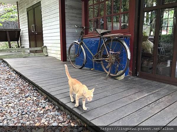 IMG_0678 合興 爸爸的腳踏車