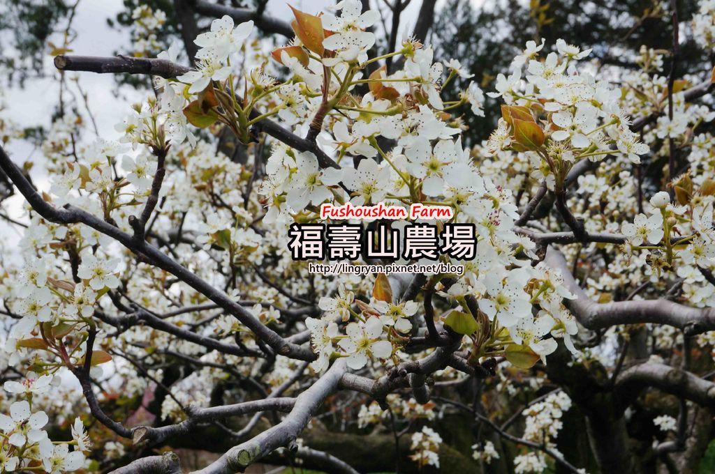 DSC04785_副本.jpg