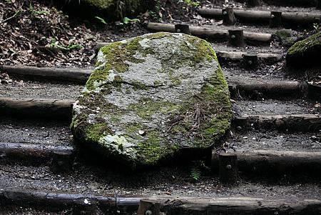 滾石不生苔