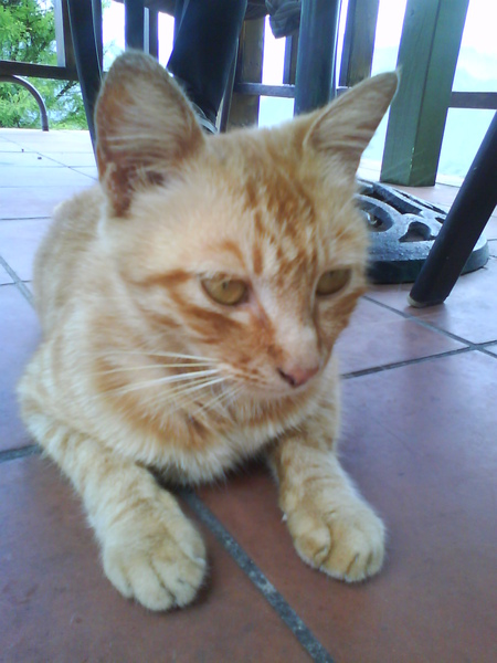 小懶貓~雖然瘸了一隻腳