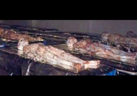期最新流出「羅斯威爾飛碟事件」外星人屍體照。.jpg