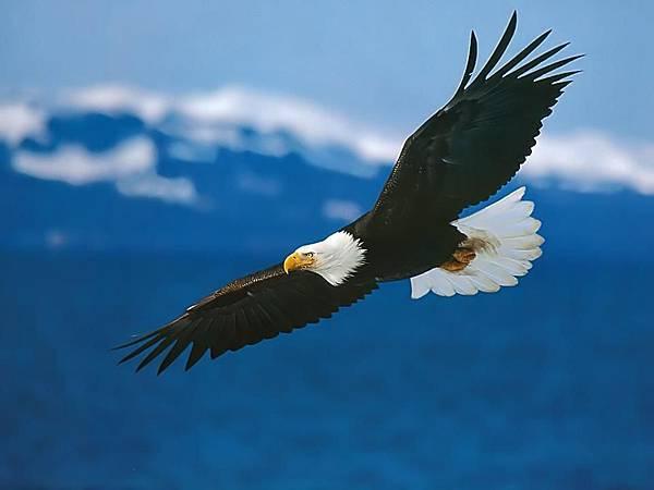 一隻鷹,懼怕天空的高度,抓緊樹枝不肯放開,馴鷹人一籌莫展。.jpg