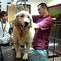 YG杂志-宠物特集,专业人士向健辉示范为狗狗清洁的过程~