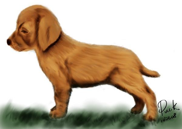 幼犬+草皮.jpg