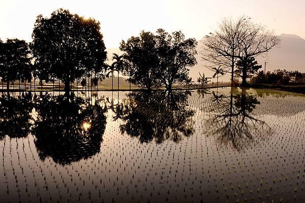 都蘭山下的水田