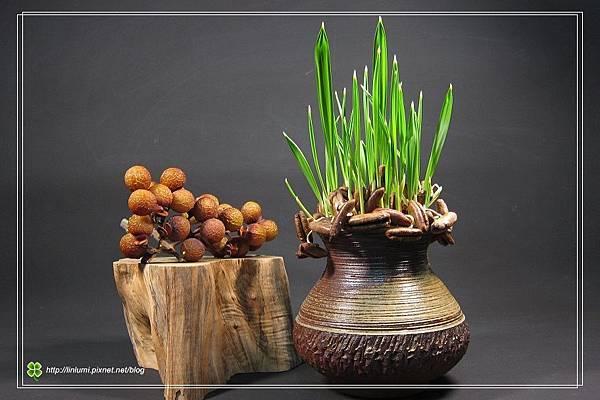 阿拉伯椰棗