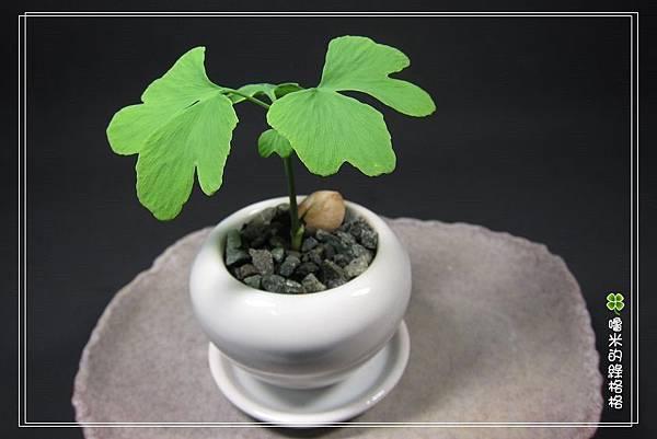 種子盆栽近期成品集