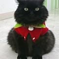 甜美草莓貓