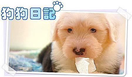 狗狗日記.jpg