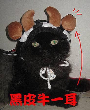 黑皮牛一耳