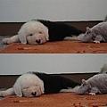 sleep alpha.jpg