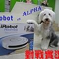 alpha vs irobot.jpg
