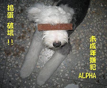 小嫌犯ALPHA.jpg