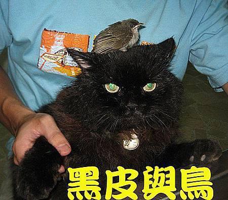 黑皮與鳥.jpg
