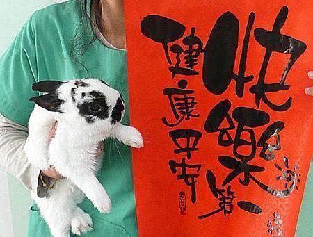 豆子的兔年.jpg