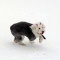 雪地奔跑.jpg