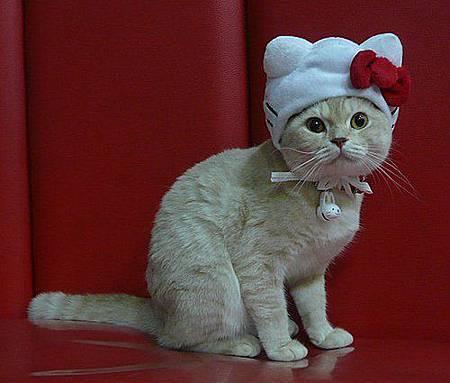 奶皮KITTY帽.jpg
