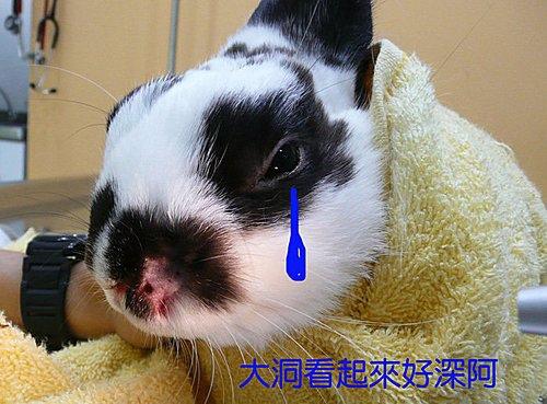 Oxpomxp7dyx498gTcs2QhQ.jpg