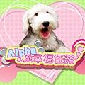 momo newdog-b.jpg