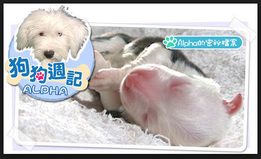 狗狗週記 2.jpg