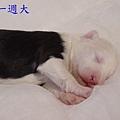 BABY004(2005-12-2).JPG