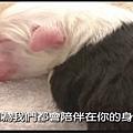 狗狗週記1.jpg