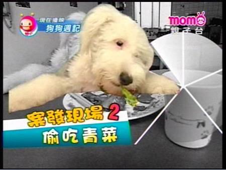 ALPHA偷吃青菜.jpg