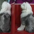 rabbit alpha s.jpg