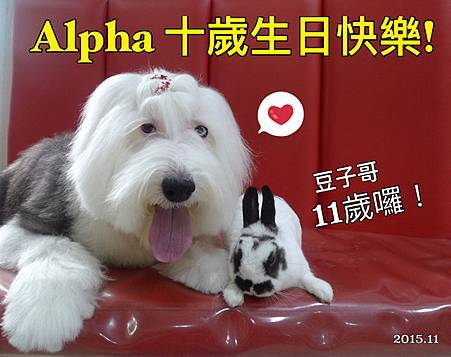 alpha 10 yr s.jpg