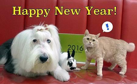 2016 new yr.jpg