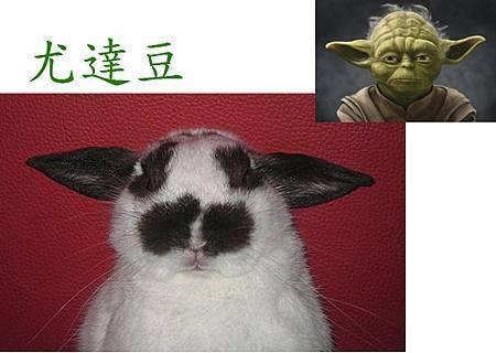 yoda豆.jpg