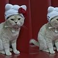 kitty nippy.jpg