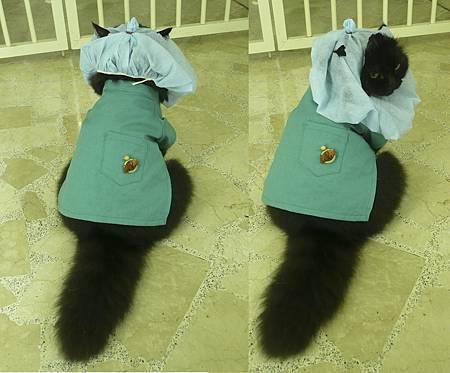 貓外科醫生.jpg