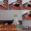 IMG_0599 add4.jpg