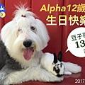 alpha 12yr.jpg