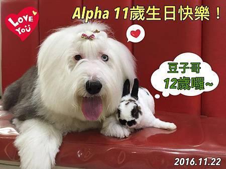 alpha 11yr.jpg