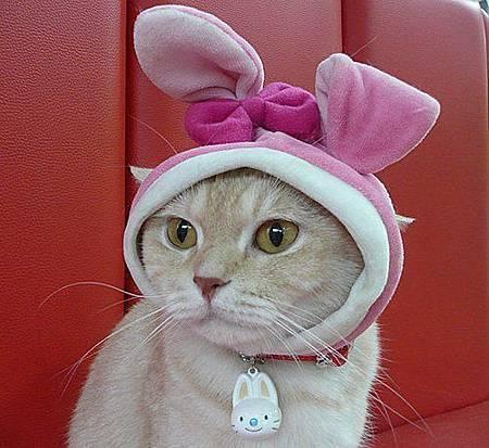 兔帽奶皮.jpg
