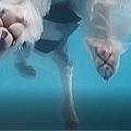 Alpha swim.jpg