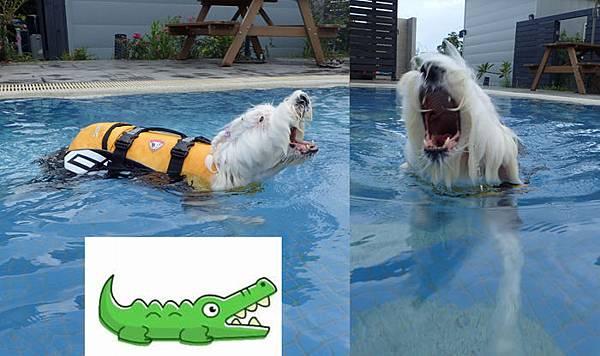 鱷魚發.jpg