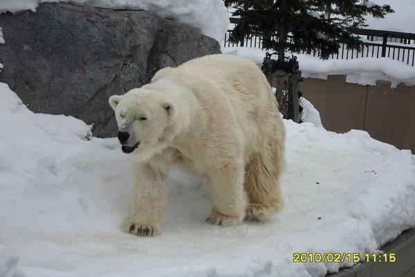 99.2-北海道-旭山滑雪場-28(動物園北極熊).JPG