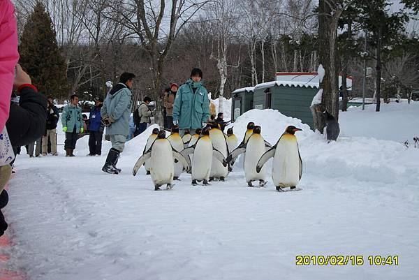 99.2-北海道-旭山滑雪場-25(動物園企鵝遊行).JPG