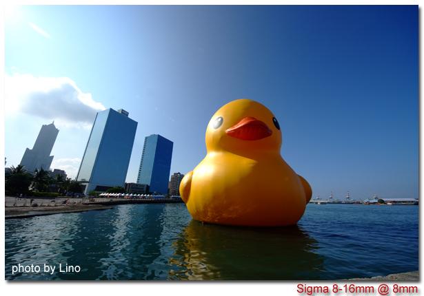 duck-002
