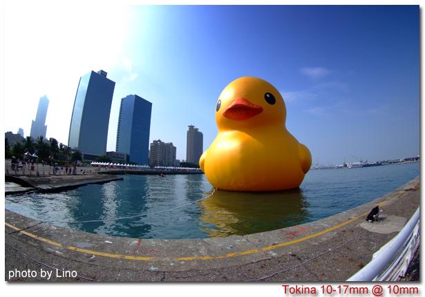 duck-001