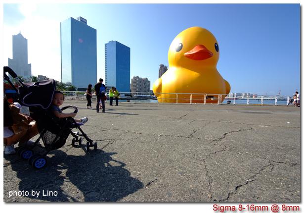 duck-006