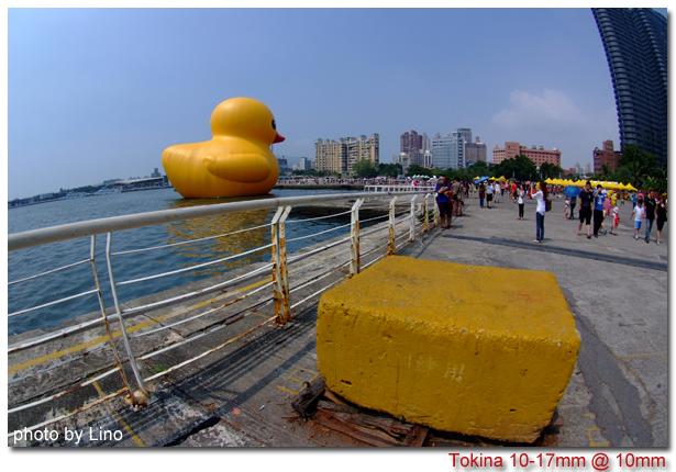 duck-005